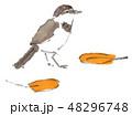 セキレイ 鶺鴒 鳥のイラスト 48296748