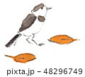 鶺鴒 鳥 小鳥のイラスト 48296749