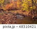森林 林 森の写真 48310421