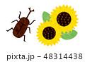 カット-夏素材13テク 48314438