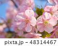 花 ピンク 春の写真 48314467