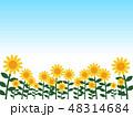 青空とひまわり背景 48314684