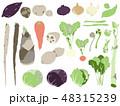 野菜 山菜 白背景のイラスト 48315239