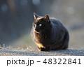 黒猫 猫 野良猫の写真 48322841