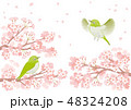 満開の桜とメジロのイラスト 48324208