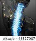 解剖学的 人体 解剖学のイラスト 48327087