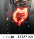 腸 メディカル 医療のイラスト 48327109