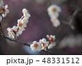 梅 梅の花 花の写真 48331512