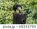 鳥 野鳥 ワシの写真 48333793