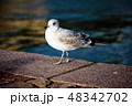Seagull portrait against sea shore. Close up view of white bird seagull sitting by embankment 48342702
