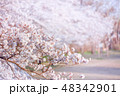 桜 花 春の写真 48342901