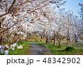 桜 花 春の写真 48342902