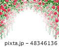バラ 薔薇 48346136