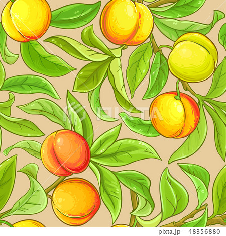 peach vector pattern 48356880