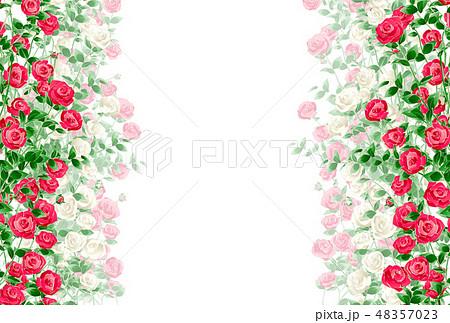 バラ 薔薇 48357023