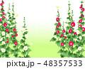 立葵 48357533