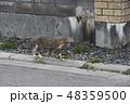 散歩する猫 48359500