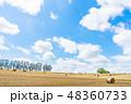畑 北海道 夏の写真 48360733