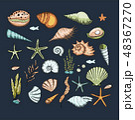 貝 貝がら 貝殻のイラスト 48367270