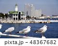 ユリカモメ 鳥 カモメの写真 48367682