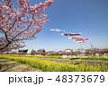 河津桜 桜 春の写真 48373679