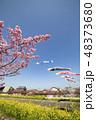 河津桜 桜 春の写真 48373680