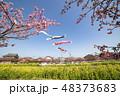 河津桜 桜 春の写真 48373683