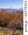 紅葉 雑木林 富士山の写真 48379303