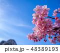 花 春 空の写真 48389193