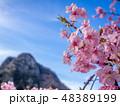 花 春 空の写真 48389199