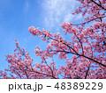 花 春 空の写真 48389229