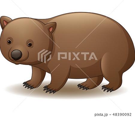 Illustration of wombat isolated  48390092