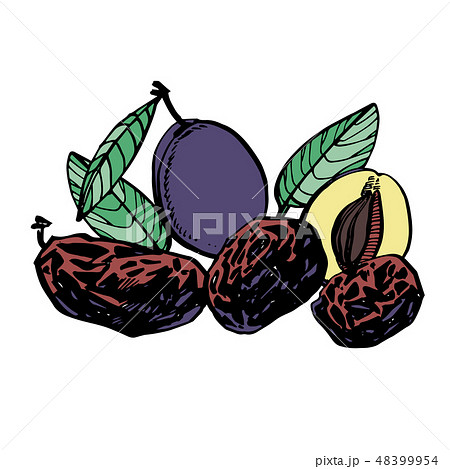Prunes and plums hand drawn illustration. Ink sketch of nuts. Hand drawn illustration. Isolated on 48399954