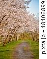 桜 花 春の写真 48406899