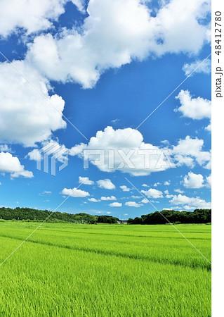 夏の青空と広大な田園風景 48412780