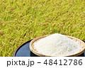 秋 田んぼ 米の写真 48412786