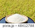 秋 田んぼ 米の写真 48412788