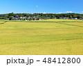 空 稲 米の写真 48412800