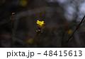 小さい 黄色 花の写真 48415613