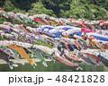 【泳げ鯉のぼり相模川】 48421828