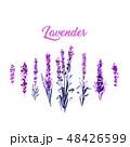 ラベンダー フラワー 花のイラスト 48426599