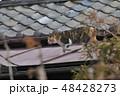 猫 動物 ノラ猫の写真 48428273