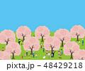 お花見で桜を楽しむ人々 48429218