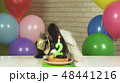 Fancy Dog Papillon eating birthday cake with candle 48441216