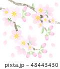 桜の花パーツ 48443430