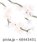 桃の花のパーツ 48443431