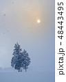 親子の木 48443495