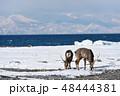 冬 海 雄の写真 48444381