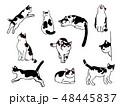 猫のイラストセット 48445837