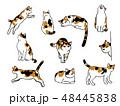 猫のイラストセット 48445838